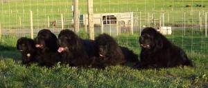 Photo Gallery - FIVE Generations - Prentiss (9wks), Maizy (2.5yrs), Oscar (6yrs), Willie (shy 14yrs) & Loretta (shy 11yrs)