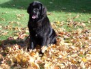 Tug - Enjoying the Fall Leaves