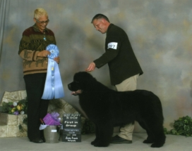 Oscar - Group 1 & another Best Puppy in Show (Judge: Sue Ellyn Remple)