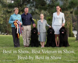 2010 International Show-Mostabear Wins It All !