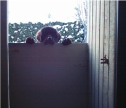 "Puppy Antics - Ellie2 - ""Why Can't I Come In?"""