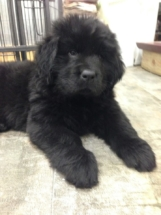 Puppy Antics - baby Piper